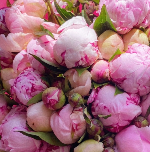 подарить тебе цветочки
