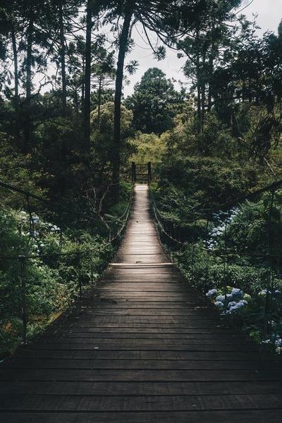 ℬℊЧто такое быть лесомдышать миллионами листьев смотреть миллионами глаз ощущать