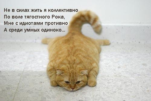 Eye Cat Felidae Carnivore