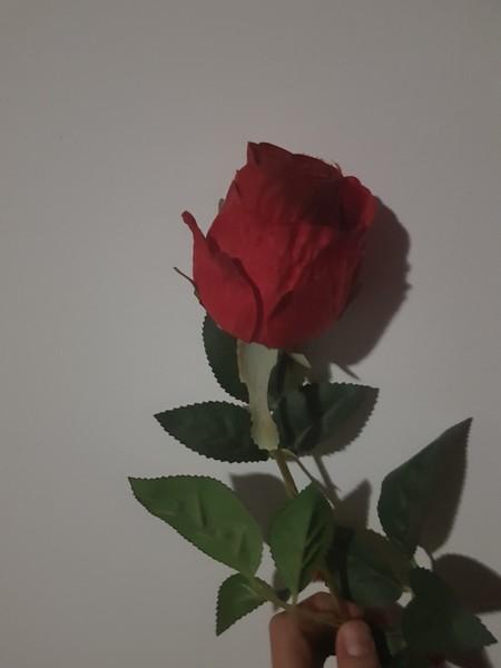 Per chi era la rosa della foto del profilo