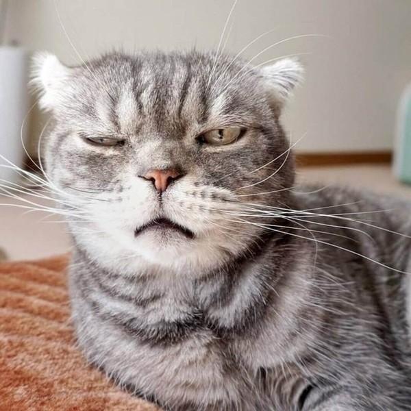 Какой ты сегодня котичек Выложи фото