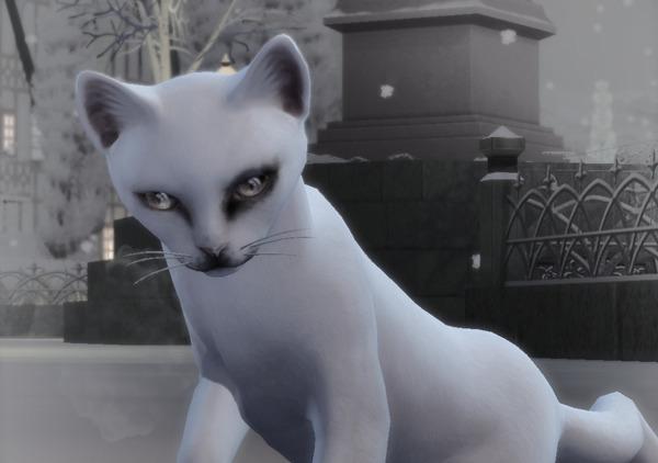 Angenommen du würdest dir jetzt eine neue Katze zulegen welchen Namen würdest du