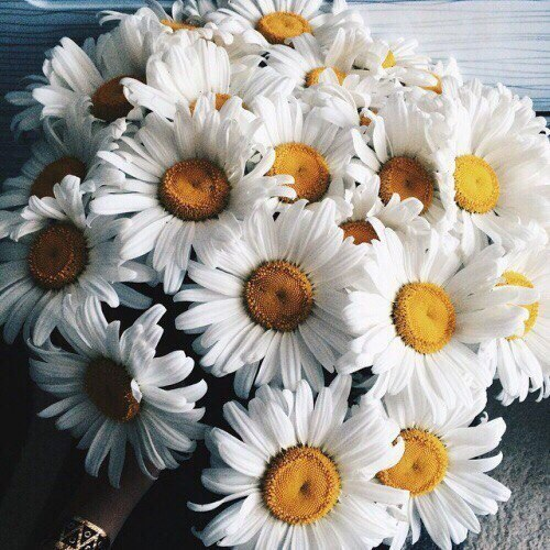 Какие любишь цветы ну или нравятся