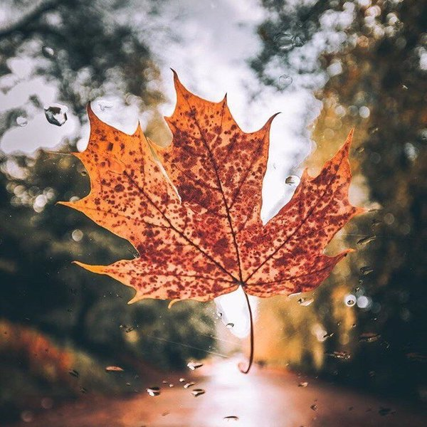 Любишь осень